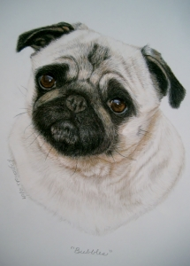Pug done in color pencil/watercolor paint $575