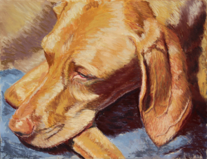 Vizsla in pastel commissioned portrait
