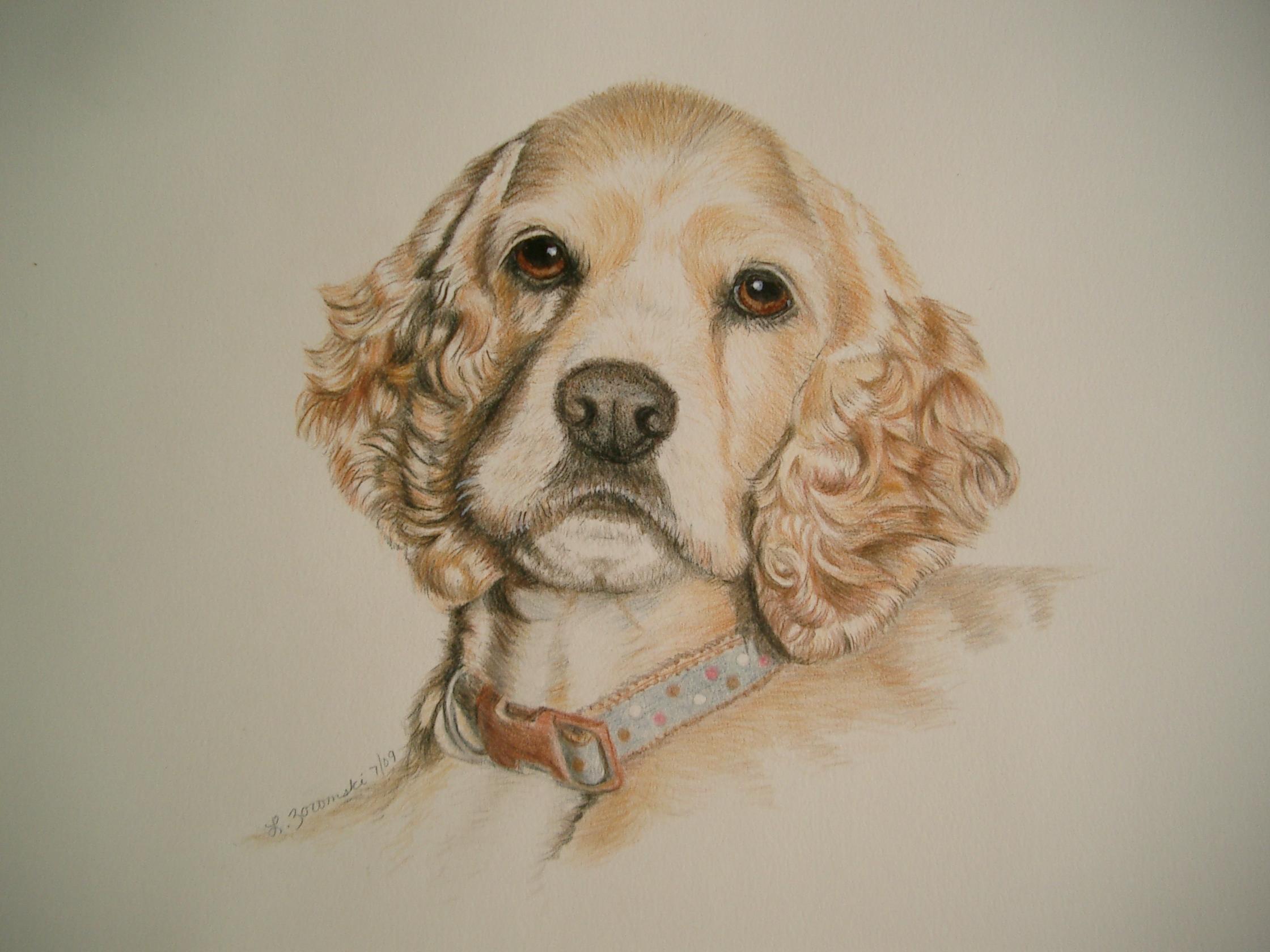Dog Portrait Cocker Spaniel