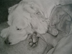vizlsa dog art, golden retriever art