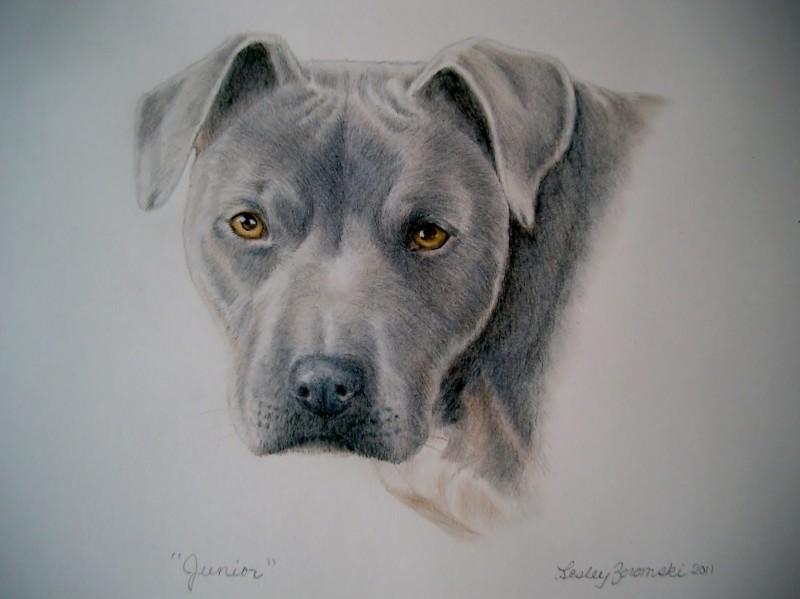 Dog Whisperer Junior