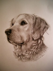 Graphite of English Golden Retriever