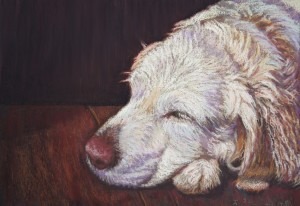 English Golden Retriever, pastel painting,
