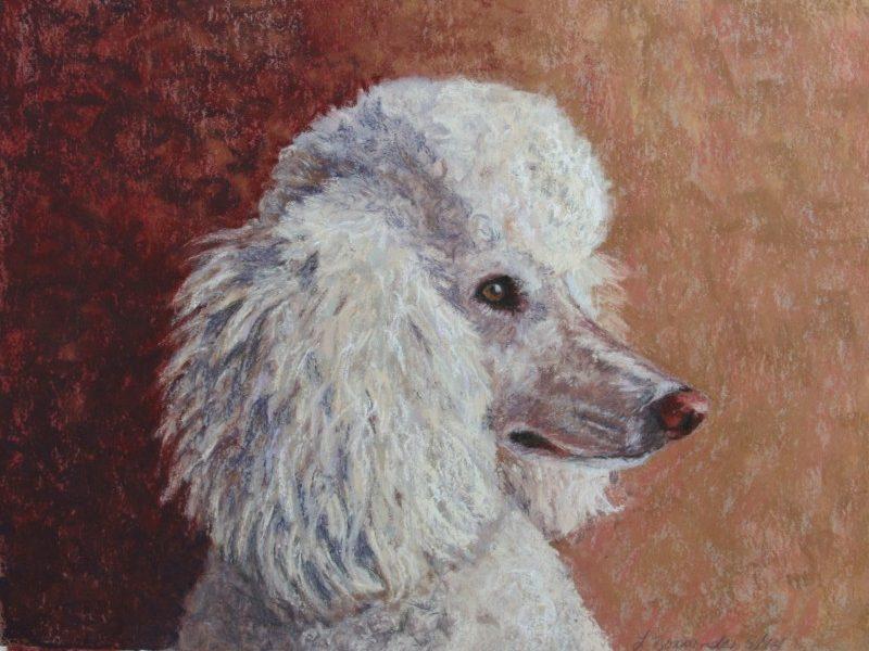 standard poodle, pastel painting, custom dog painting by dog portrait artist Lesley Zoromski, Petaluma, CA