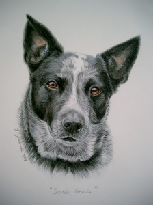 commission custom portrait of cattle dog