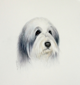 Mac - Bearded Collie