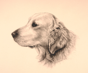 graphite dog commissions