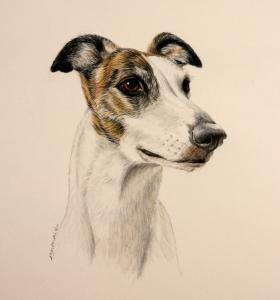 Greyhound color pencil/ watercolor paint portrait