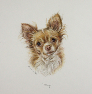 """Macy"" is done with color pencil/water color paint on an 14″x11″ piece of Strathmore paper."