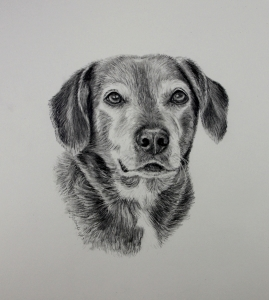 graphite dog portraits, commission dog portraits