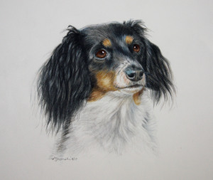 Color Pencil,dog portraits,commissions