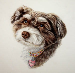 color pencil commissions of dogs