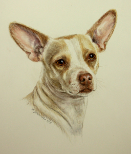 color pencil, dog drawings, commissions