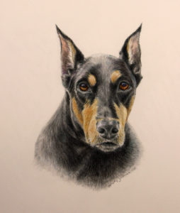 dog painting, doberman pinscher