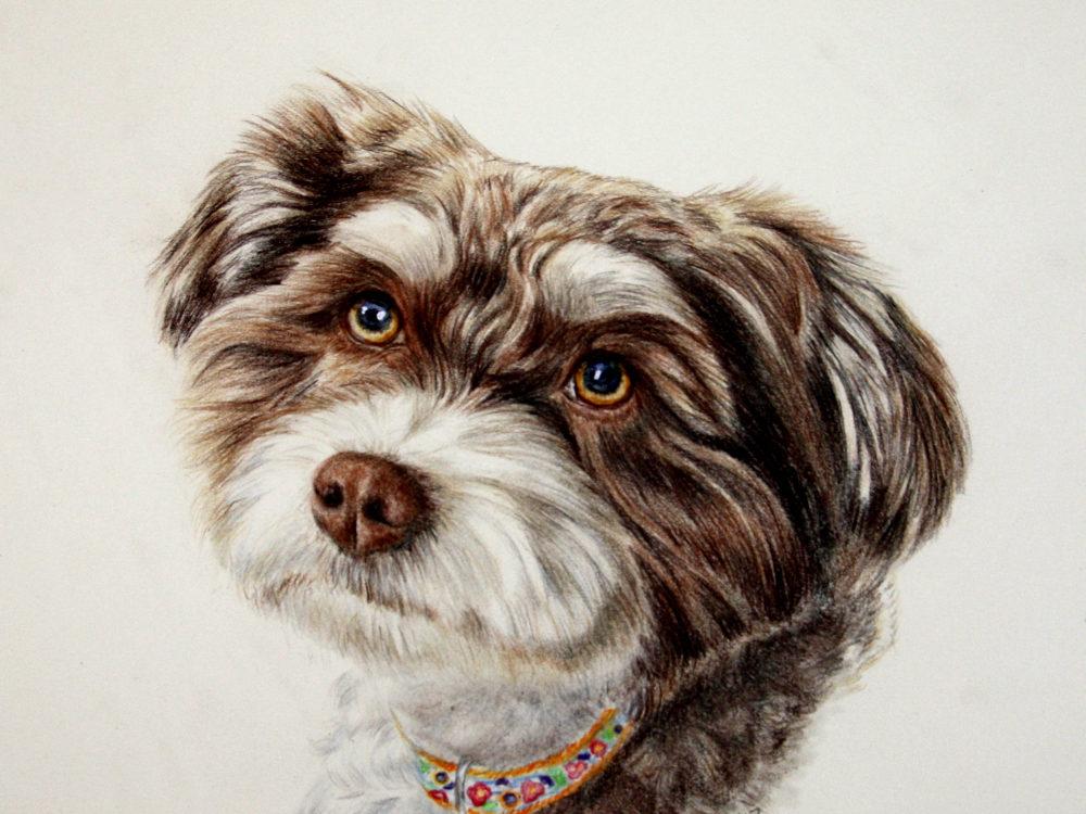 Ms. Charlie -  by dog portrait artist Lesley Zoromski, Petaluma, CA
