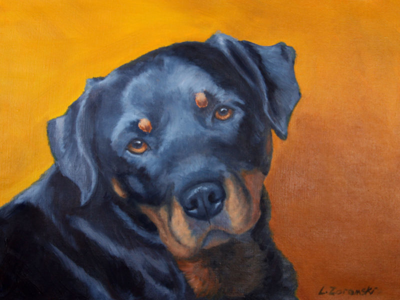 rottweiler, custom oil painting