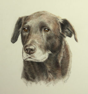 dog art commission, color pencil, watercolor paint