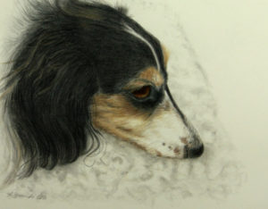 Pencil drawing of resting dachshund dog