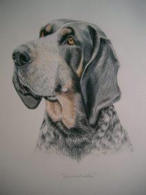color pencil bluetick coon hound portrait, custom dog art
