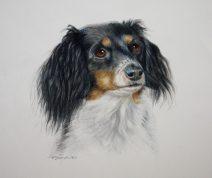 Color Pencil,dog portraits,commissions