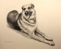 Graphite commission portrait of German sheperd dog