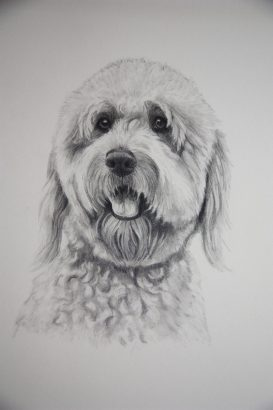 dog portrait in graphite as a Christmas gift