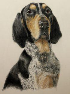 Hank-dog-portrait-cropped