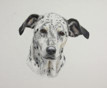 Dalmation mix breed dog in color pencil watercolor paint