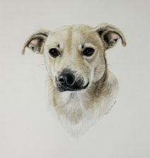 color pencil, water color paint, chihuahua, terrier