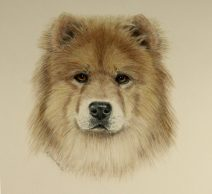 Chow Chow Dog, Commission art drawing