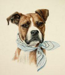 boxer dog custom art