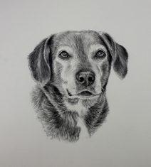 graphite dog portraits, commission dog portraits