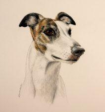 Greyhound color pencil/ watercolor paint portrait