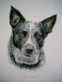 commission custom portrait of cattle dog