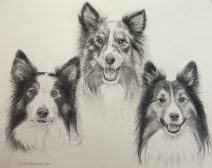 Graphite drawing of 3 Sheltie Dogs
