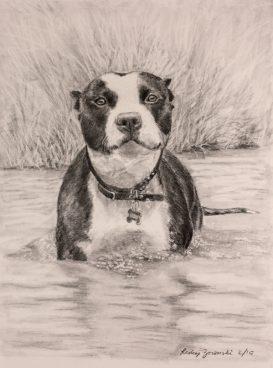 anniversary gift graphite dog commission portrait of pitbull